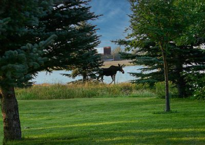 Moose walking near water at Wakeside Lake RV Park